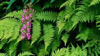 Ferns great smoky mountains orchids north carolina wallpaper