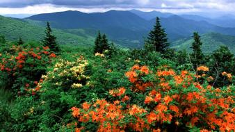 Flowers bloom trail flame appalachian azaleas north carolina wallpaper