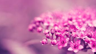 Flowers pink ea blurred background Wallpaper