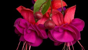 Flowers vibrant fuchsia pink wallpaper