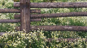 Landscapes flowers forest national colorado chamomile wallpaper