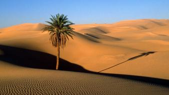Landscapes nature desert palm trees wallpaper