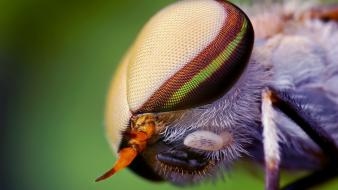 Nature eyes animals insects wildlife fly macro wallpaper