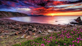 Water sunset clouds flowers rocks scenic skies Wallpaper