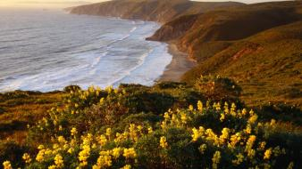 Yellow point california national sea shorelines lupine wallpaper