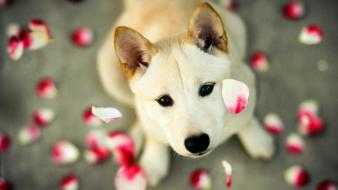 Animals dogs flower petals looking up Wallpaper