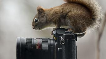 Animals squirrels cameras objects wild riding wallpaper