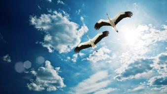 Birds skyscapes storks wallpaper