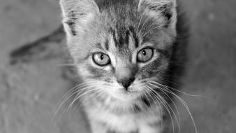 Black and white cats animals kittens baby wallpaper