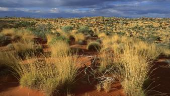 Desert grass little sandy australia Wallpaper