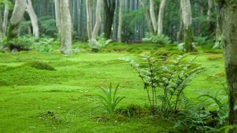 Japan nature forest wallpaper