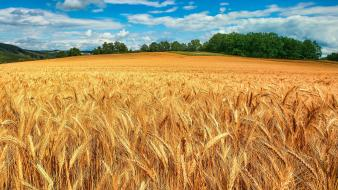 Landscapes nature fields wheat wallpaper