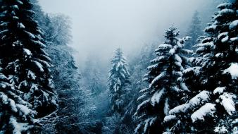 Landscapes nature winter snow evergreens snowing wallpaper