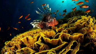 Nature animals fish coral lionfish underwater wallpaper