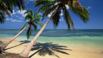 Nature beach coconut palm trees seascapes dominican republic wallpaper
