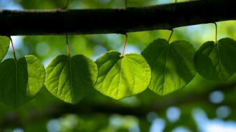 Nature leaves sunlight wallpaper