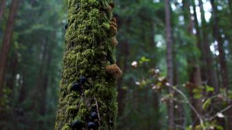 Nature trees forest mushrooms moss wallpaper
