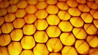 Windows 8 honeycomb bees wallpaper
