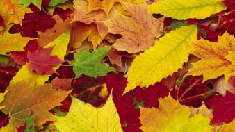 Autumn (season) leaves york wallpaper
