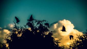Blue clouds trees birds timeshift Wallpaper