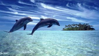Clouds nature animals islands dolphins sea wallpaper