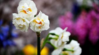 Flowers white blurred background wallpaper