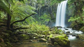 Jungle forest waterfalls rivers wallpaper
