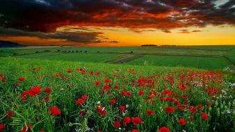 Landscapes flowers anemones (flower) skies wallpaper