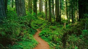 Landscapes forest path california national park wallpaper