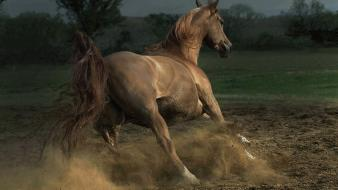 Nature animals horses wallpaper