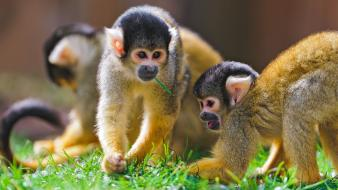 Nature animals monkeys Wallpaper