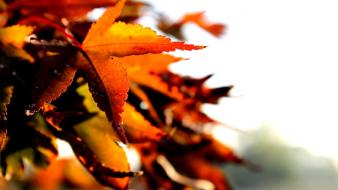 Nature autumn (season) leaves depth of field wallpaper