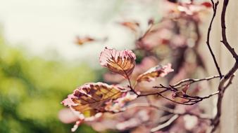 Nature flowers leaves bokeh macro blurred branches twig wallpaper