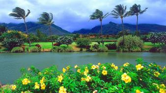 Nature hawaii tropical maui plantation wallpaper