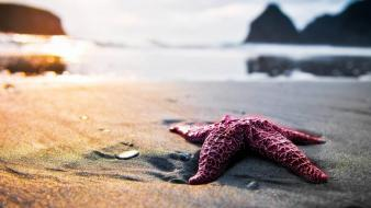 Nature sand starfish oceans sea Wallpaper
