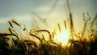 Nature sun fields plants skyscapes wallpaper