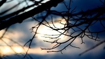 Silhouette sunlight branches blurred background wallpaper