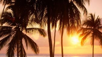 Sunset nature coast palm trees tanzania wallpaper