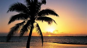 Sunset nature tropical palm trees wallpaper