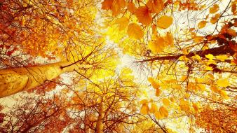 Trees leaves sunlight wallpaper