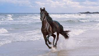 Beach horses hdr photography wallpaper
