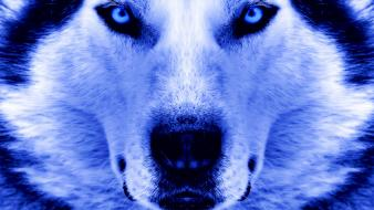Close-up winter animals artwork faces wolves wallpaper