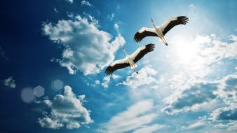 Clouds birds skyscapes Wallpaper