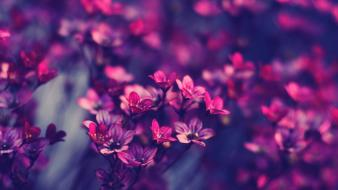 Flowers violet purple wallpaper