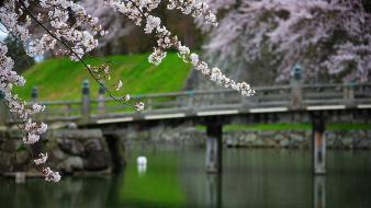 Japan nature garden bridges blossoms wallpaper