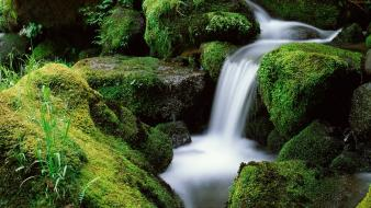 Landscapes forest national moss oregon waterfalls creek wallpaper