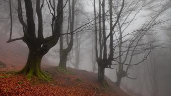 Landscapes nature trees autumn (season) forest leaves fog wallpaper