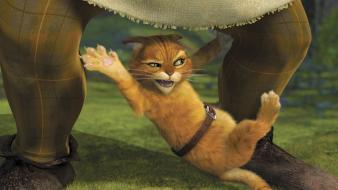 Movies cats animals shrek puss in boots wallpaper