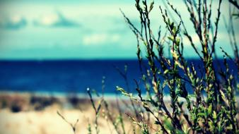 Plants depth of field blurred background sea wallpaper