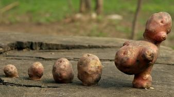Potatoes creativity wallpaper